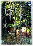 Wrought Iron Fence Panel Designs
